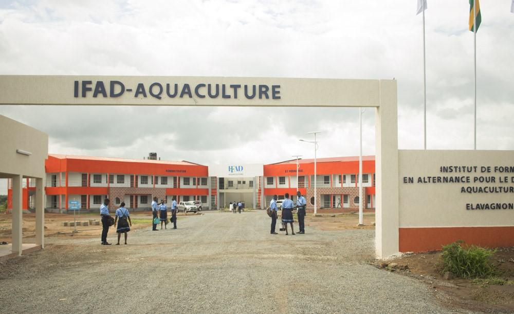 Le Président de la République, SEM Faure Essozimna Gnassingbé a annoncé en 2018 la création de dix Instituts de formation en alternance pour le développement (IFAD). Quelques mois plus tard furent lancés par le chef de l'Etat les travaux de construction du premier Institut à Elavagnon dédié à l'aquaculture, pilotés par l'Agence Education formation développement (AED).