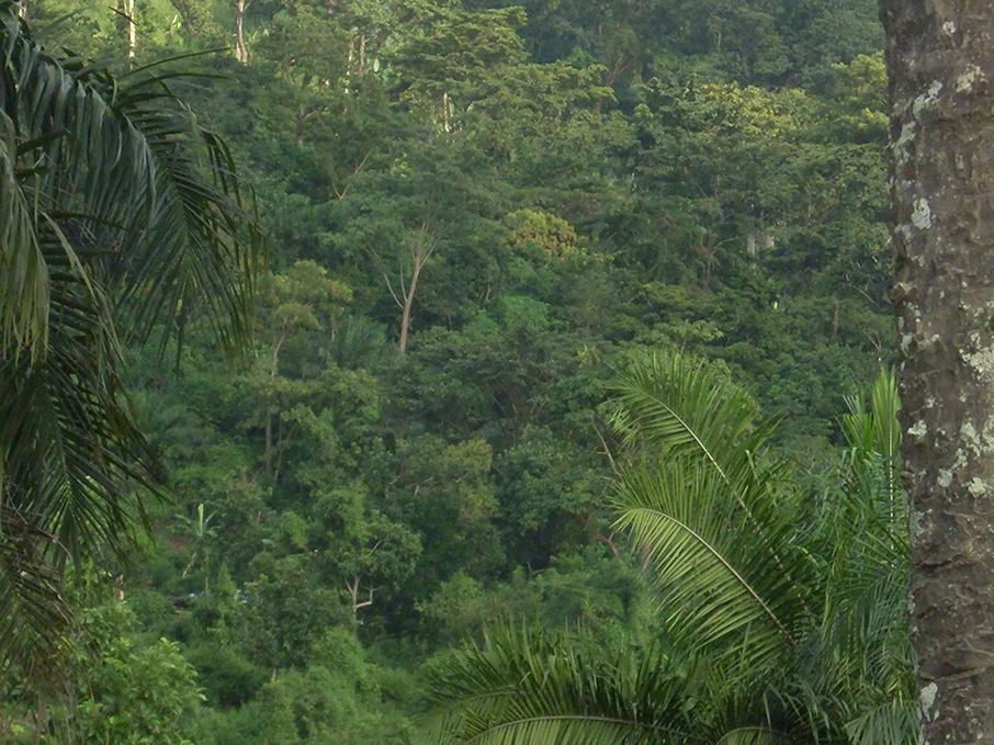 Au Togo, 24,24% du territoire est couvert de forêts, selon le premier inventaire forestier national réalisé en 2016. En plus de leur rôle de régulateur de l'environnement, ces forêts ont un apport non négligeable dans l'économie nationale.