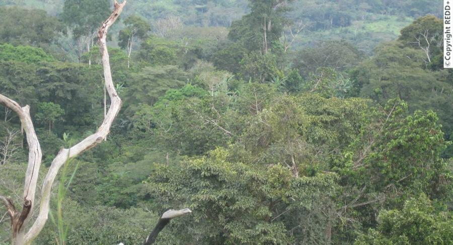 En 1977, une forte sécheresse menaçait la sous-région ouest africaine. La crainte de l'avancée du désert préoccupe alors les autorités togolaises qui ont pris des décisions énergiques pour juguler le fléau. Avec une vision écologique, le Père de la Nation, Feu Gnassingbé Eyadéma se projetait dans un Togo « vert », avec une couverture forestière optimale et un potentiel ligneux diversifié.
