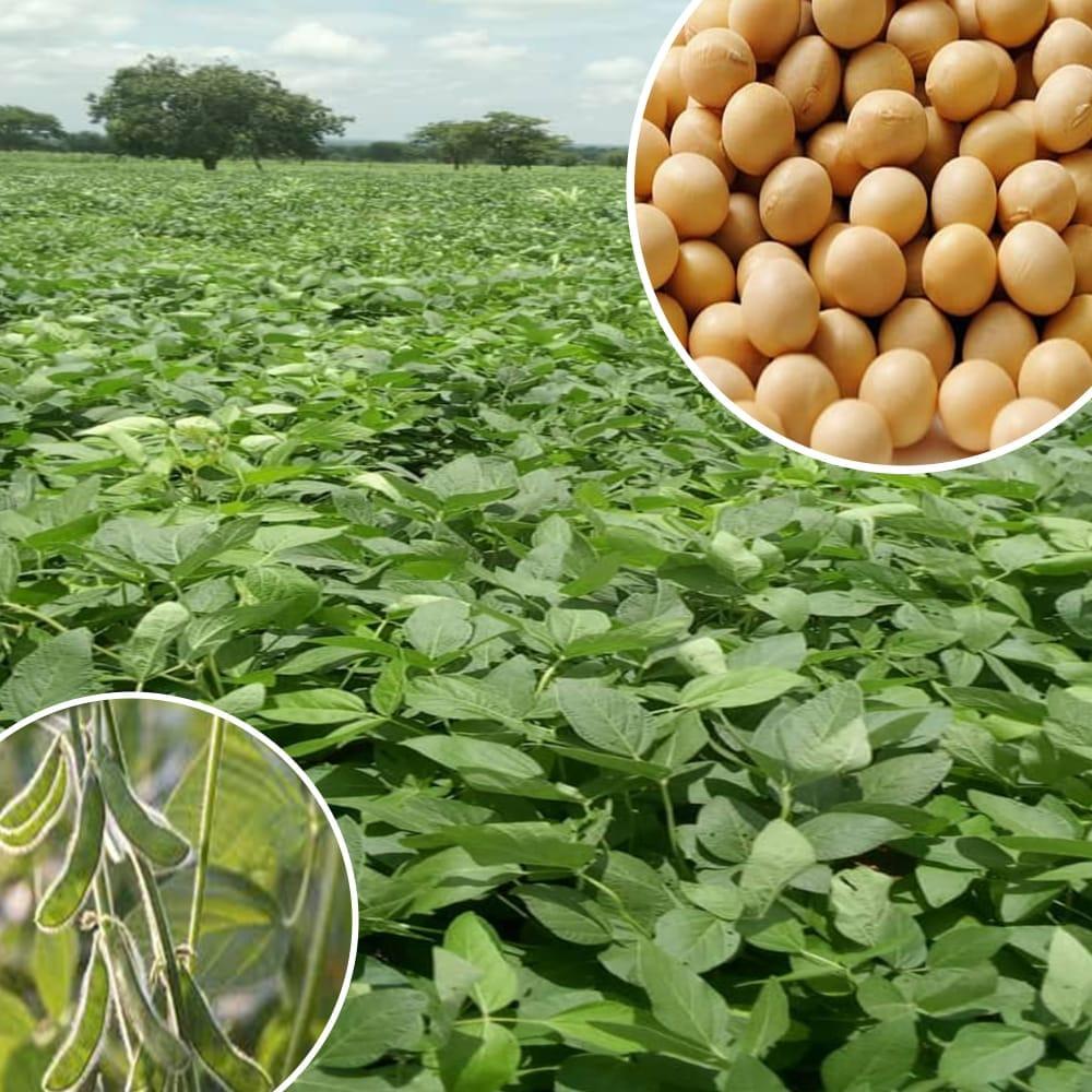 La filière bio agro-alimentaire togolaise est en pleine expansion, que ce soit sur le marché international. Selon le rapport 2020 de la Commission de l'Union européenne (UE) sur l'importation des produits bio, publié le 18 juin dernier, le Togo occupe le premier rang mondial des pays exportateurs de soja biologique vers l'espace Schengen