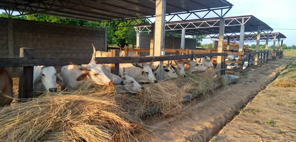 L'Institut de formation en alternance pour le développement dédié à l'élevage (IFAD-Elevage) de Barkoissi recrute ses premiers apprenants pour le compte de l'année académique 2021-2022. Les inscriptions sont ouvertes du 16 au 30 août 2021 pour les postulants au diplôme du Baccalauréat professionnel (Bac pro) dans la filière Conduite et Gestion d'une entreprise agricole option élevage.